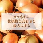 タマネギの乾燥物質含有量を最大にする