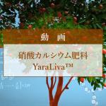 硝酸カルシウム肥料 YaraLiva™紹介動画